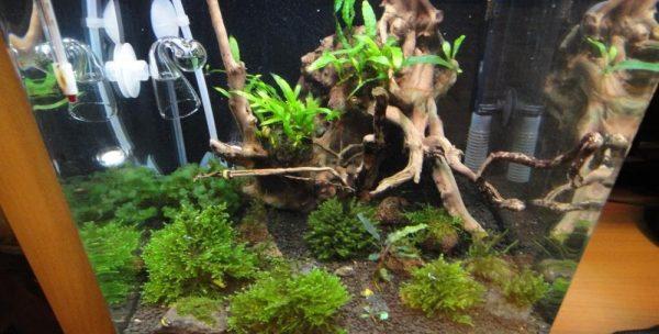 Декорация 30 литрового аквариума