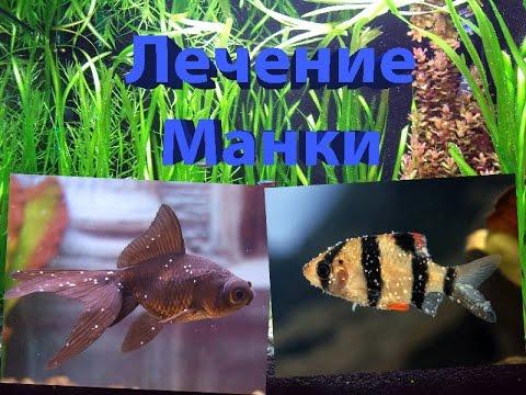 Ихтиофтириоз,манка у аквариумных рыб лечение