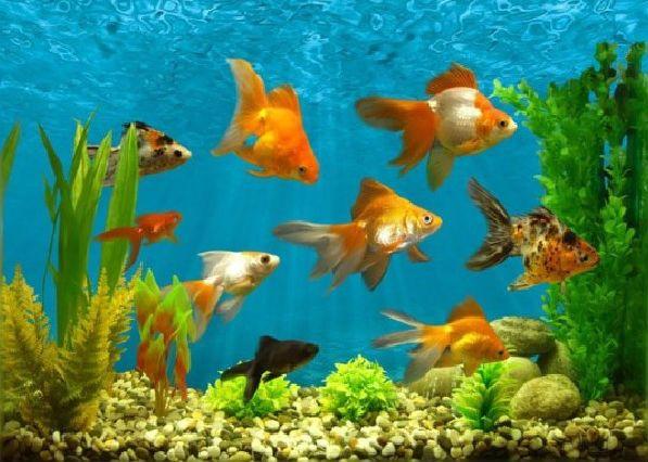 Какие рыбы болеют
