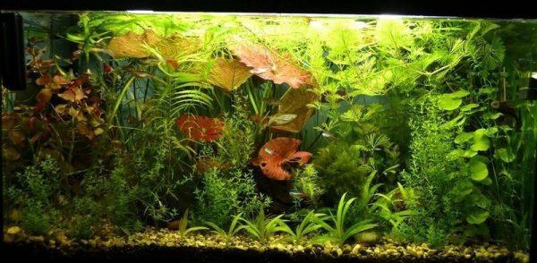 Калий и аквариум