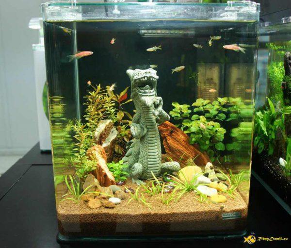 Кого поселить в 20-ти литровый аквариум