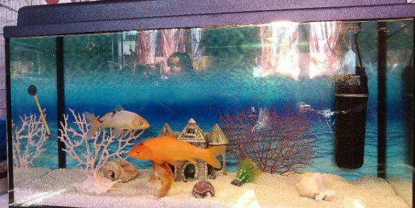 Обустройство аквариума для кои