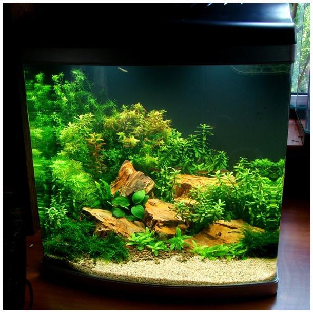 Оформление аквариума 30л