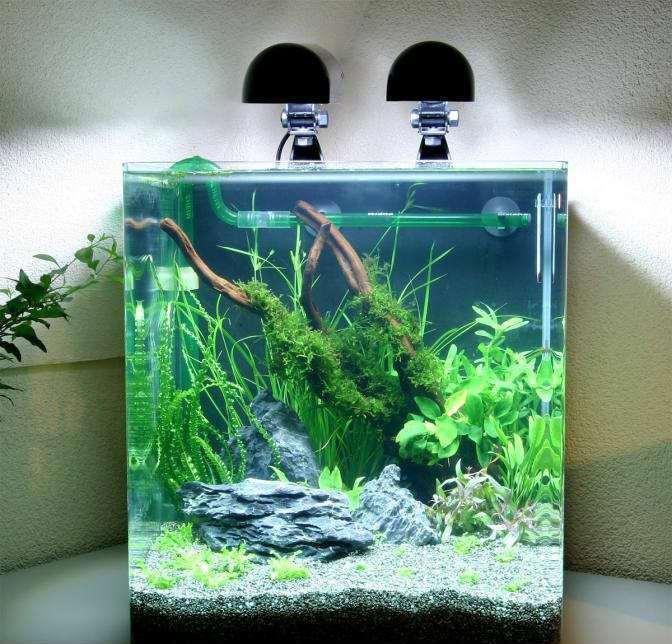 Оформление и растительность аквариума 30л