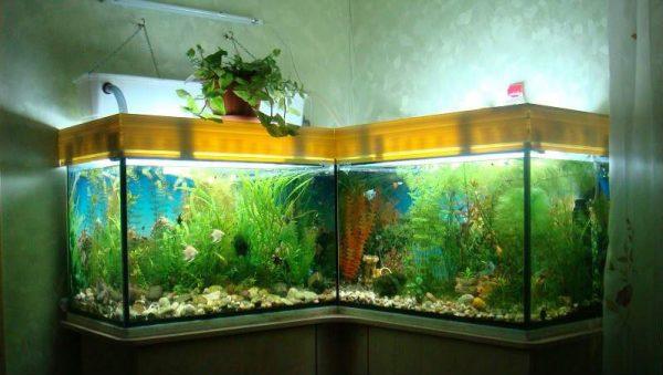 Пленка для аквариума фон
