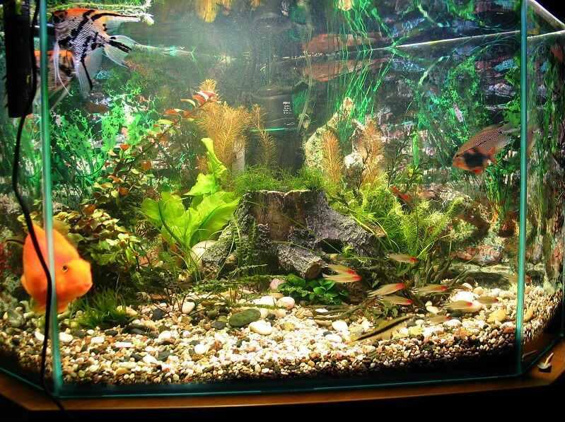 Пленка на аквариум