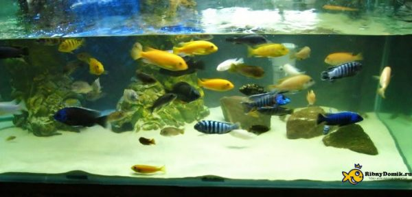 Подготовленный аквариум для песка