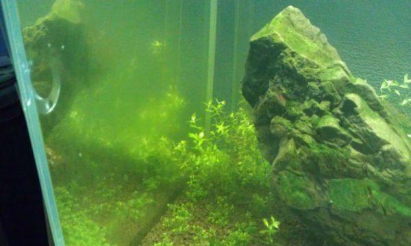 Профилактика образования водорослей и очистка от бактерий
