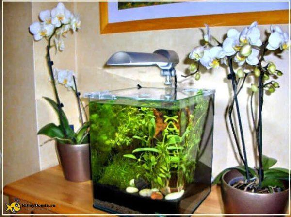 Расположение аквариума на тумбочке