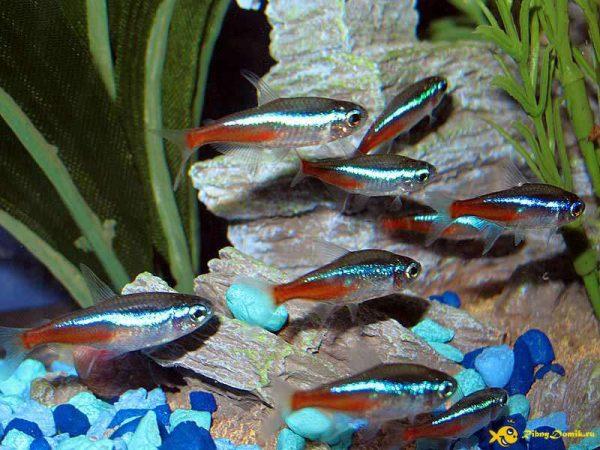 Разведение необычных рыбок
