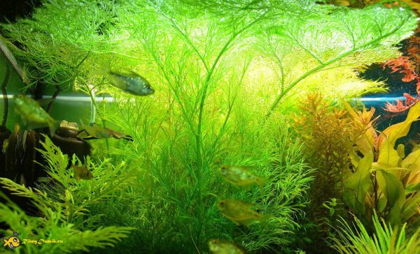 Роль для аквариума