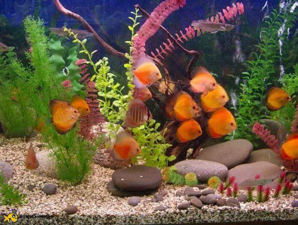 Рыбки фен шуй