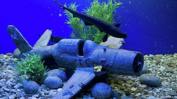 Содержание рыбки