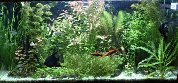 Вода в аквариуме пресная