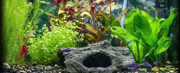 аквариум 20 литров