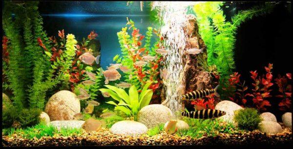 Искусственные растения для аквариума