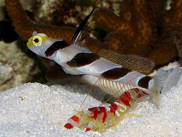 Креветки с рыбками