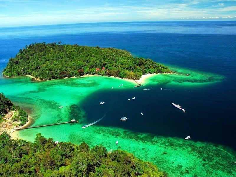 Остров борнео происхождение жемчужного гурами