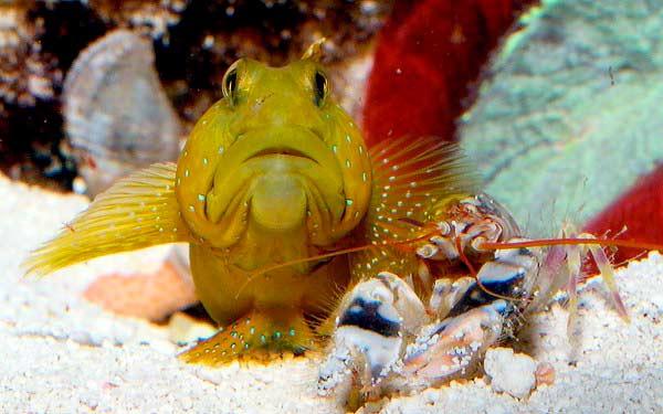 Рыбка и креветка