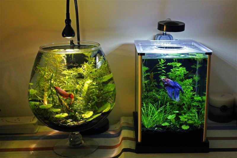Аквариумные мелкие рыбки