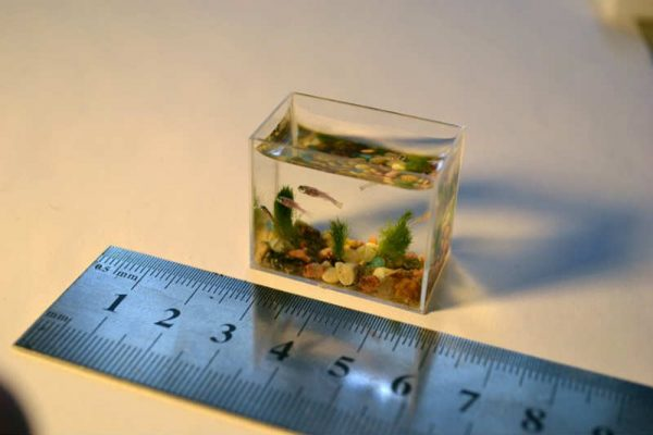 Маленький аквариум рыбки для маленького аквариума