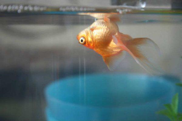 Почему умирают рыбки в аквариуме: что делать, советы