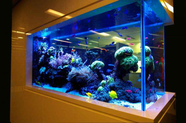 Роскошь морского аквариума