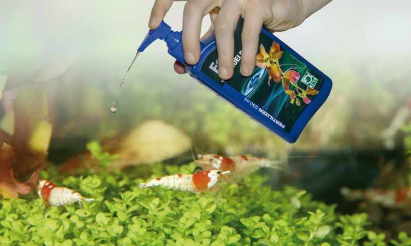 Водоросли в аквариуме как бороться