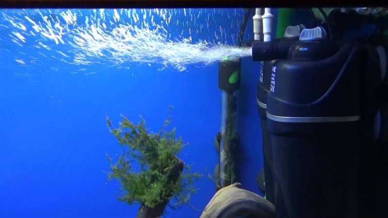 Выбираем внутренний фильтр для аквариума