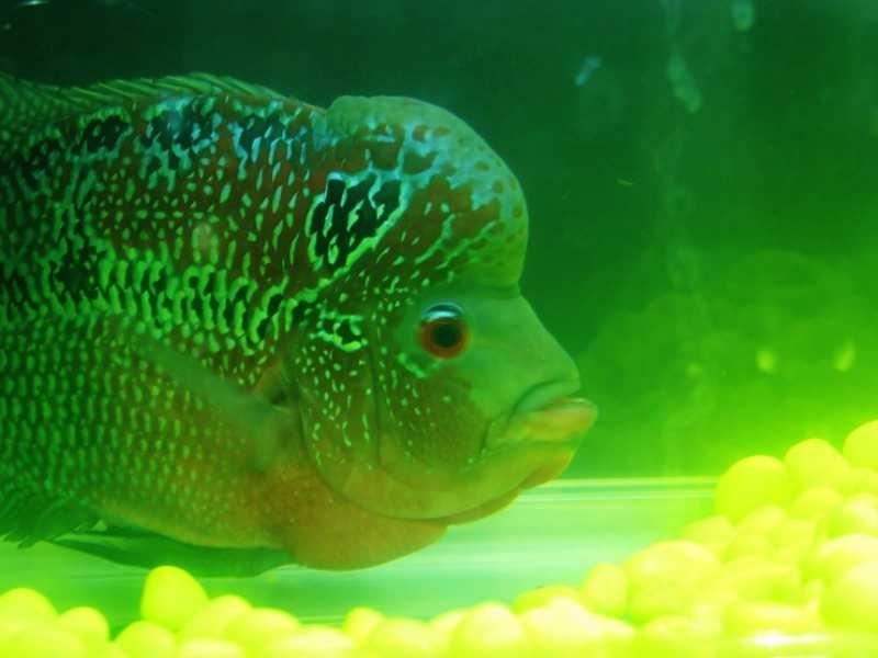 Зеленеет вода в аквариуме
