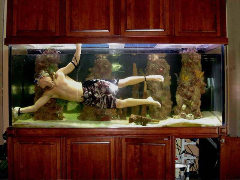 Зеленеет вода в аквариуме чистка