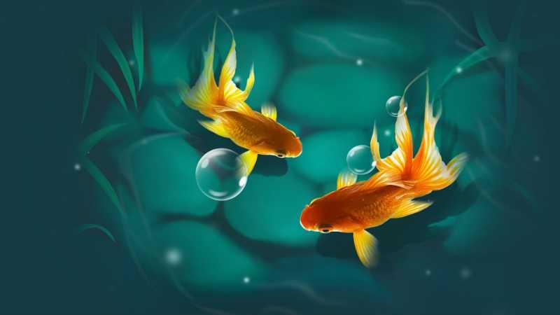 сЗолотые рыбки
