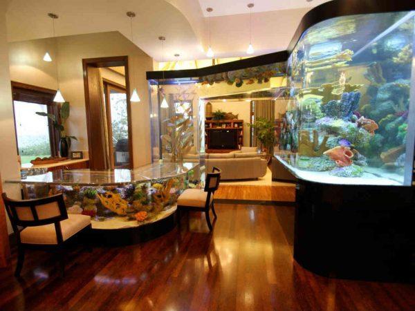 Аквариумные рыбки содержание и уход