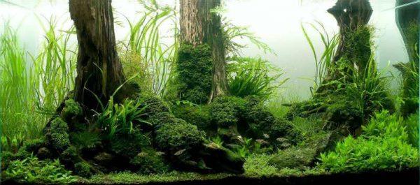 Природный дизайн аквариума