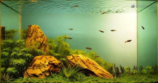 Декоративные камни для аквариума.