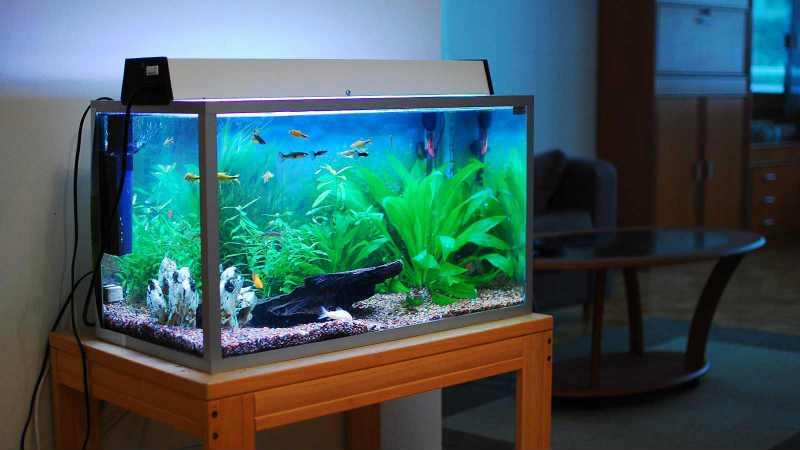 Отстаиваем аквариумную воду