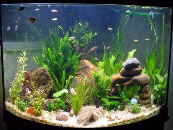 Малки аквариумни рибки