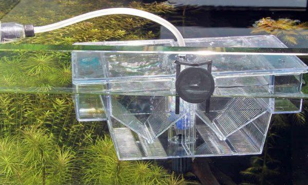 Отсадник для мальков в общем аквариуме