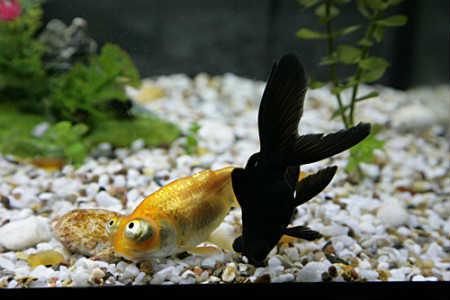 почему рыбки в аквариуме лежат на дне