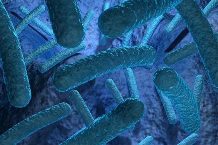бактерии для аквариума