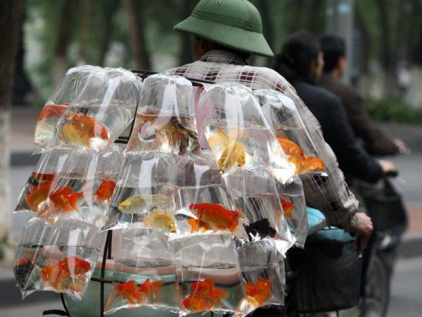 Аквариумные рыбки которые могут жить без кислорода