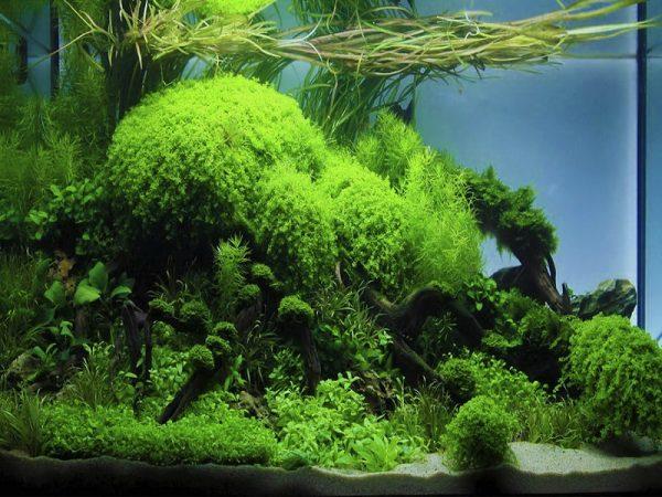 Аквариум-травник: чем заселять и как ухаживать за растениями