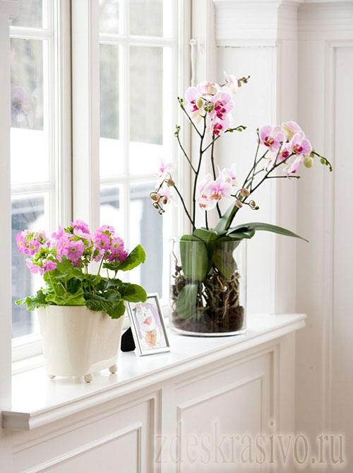 Самые лучшие места для размещения цветов в доме
