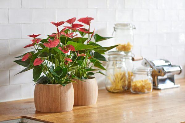 5 комнатных растений, способных принести любовь и счастье своим хозяевам