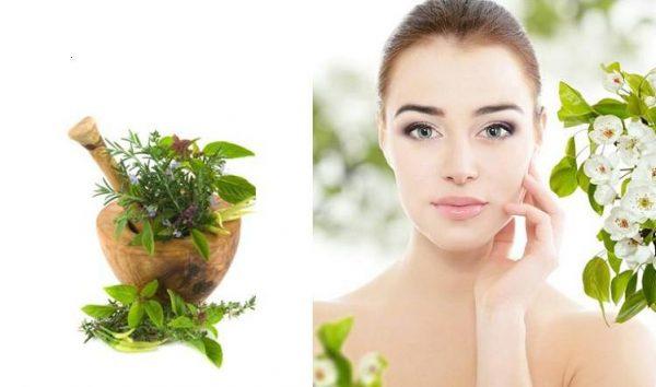 Какие травы помогут сохранить молодость и свежесть кожи – полезная подборка