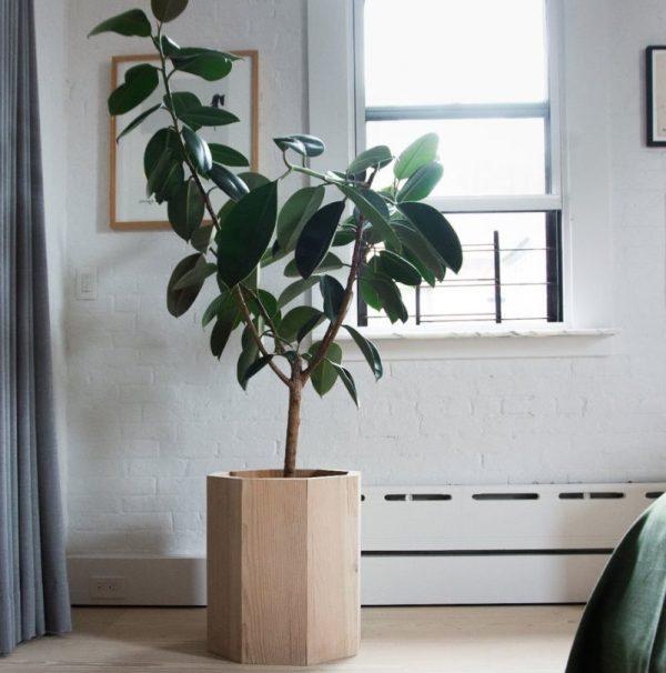 Растения, способствующие повышению работоспособности.
